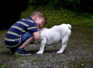 pies pupil dla dziecka